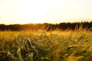 Agricoltura: fattorie sociali straordinario esempio di multifunzionalità aziendale