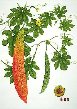 ampalya