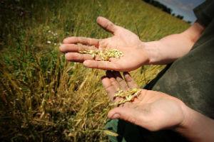 Agricoltura, Cia e Intesa Sanpaolo insieme a sostegno delle imprese agricole