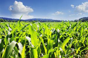 Agricoltura crea valore