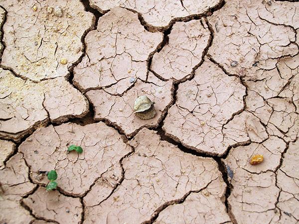 Giornata contro desertificazione